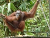 Azja 2012: Borneo - Sarawak