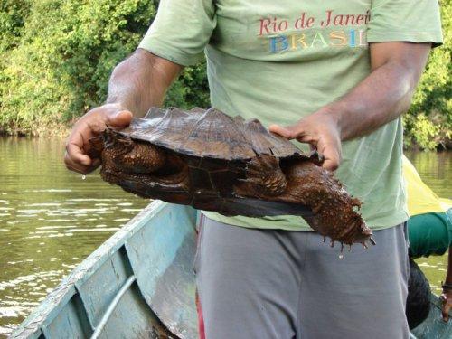 weneart2a żółw