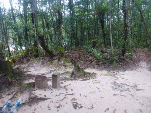 artart rainforest