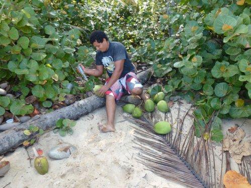 chcemy kokosa