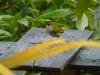 Ptaki w Andach