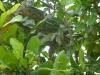 weneart2 anaconda na drzewie