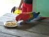 weneart2 papuga wcina makaron