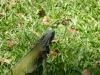weneart2 Iguana