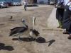Pustynia Paracas