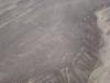 Nazca - Koliber
